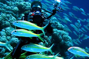 diving-krabi-3px